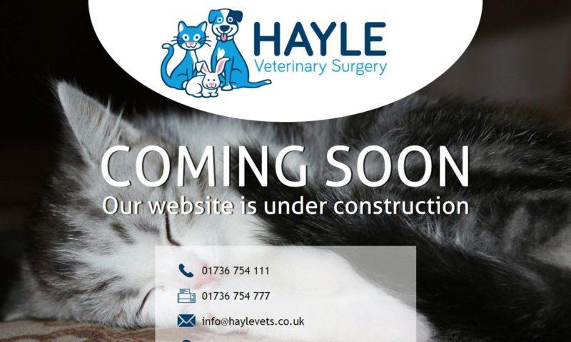 Hayle Veterinary Surgery